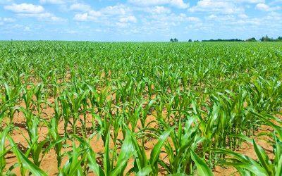 Rapport USDA avril 2018 Maïs