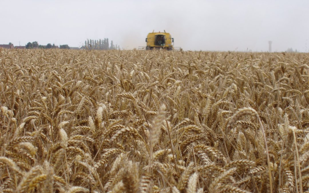 Rapport blé USDA Avril 2018