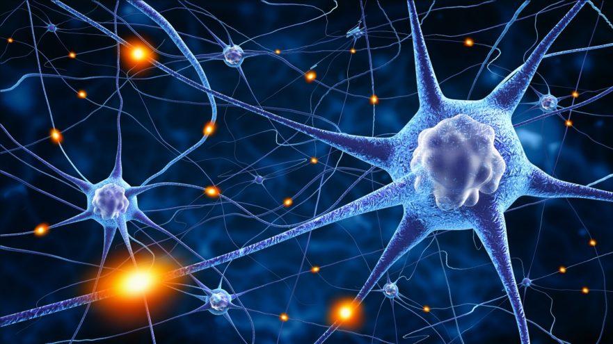 Indice foliaire des cultures et réseaux de neurones